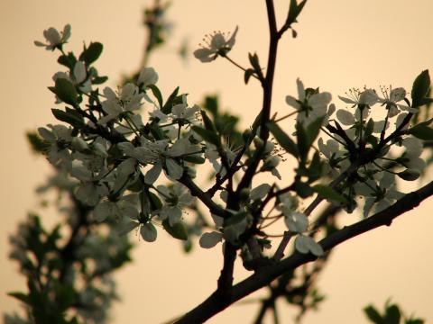 Цветы против вечернего неба
