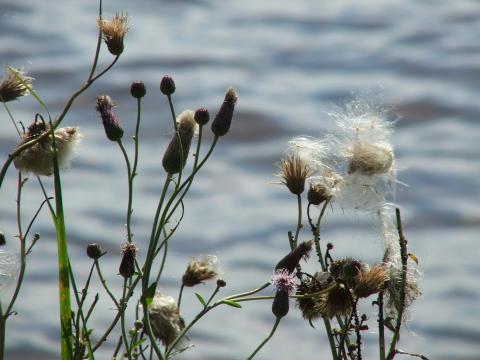 Цветы у воды