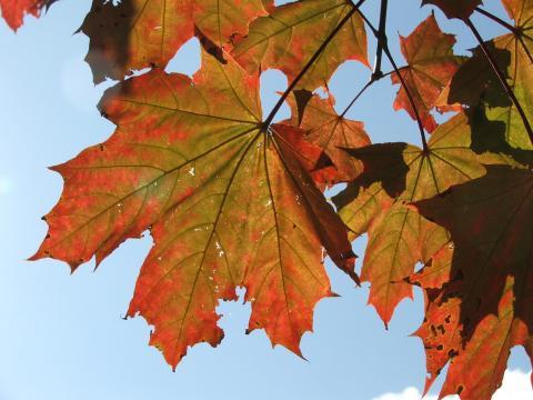 Фрактальные рисунки листьев