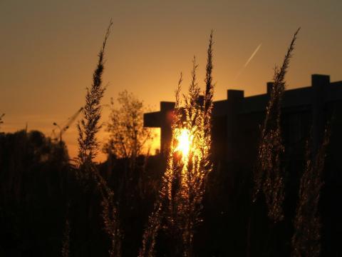 Летний закат - трава против Солнца
