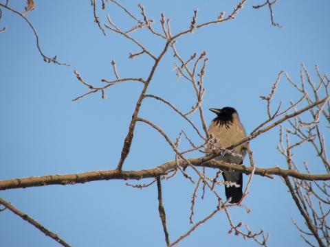 На голой ветке ворон сидит одиноко