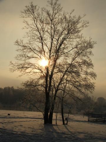 Дерево против Солнца