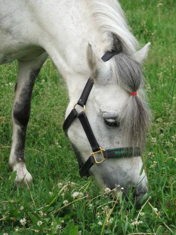 В городском парке пасется лошадь