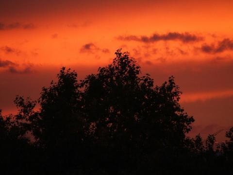 Ветки и листья на фоне заката