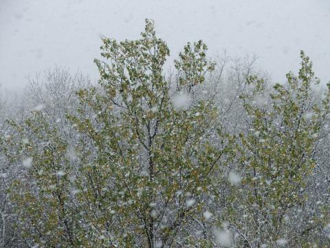 Снег идет