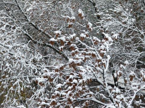 Снег на коричневых листьях