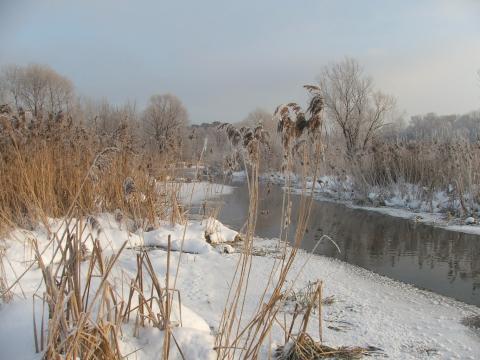Берег реки морозным утром с травой на переднем плане
