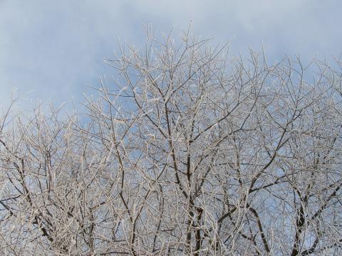 Ветки деревьев зимой на фоне сине-голубого неба
