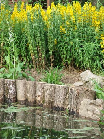 Цветы вокруг пруда
