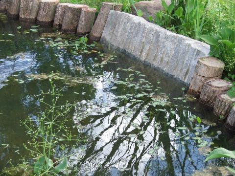 Край пруда в парке