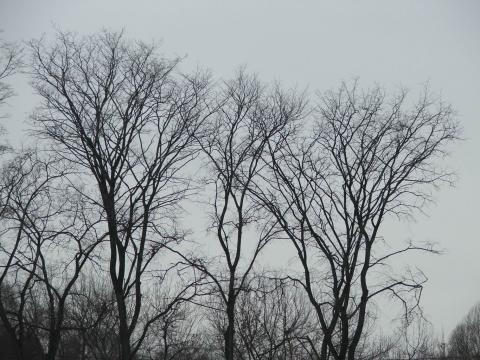 Голые деревья в городе