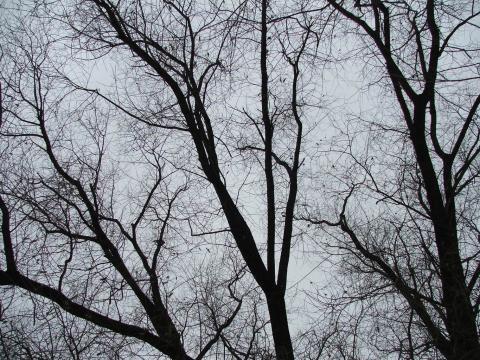 Вид на небо через голые ветки