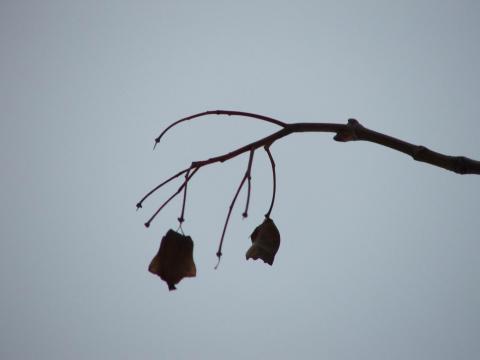Последние не опавшие листья